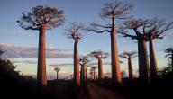 معلومات عن جزيرة مدغشقر