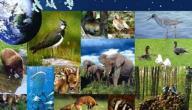 ما هي عناصر البيئة