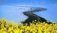 ظاهرة انشقاق البحر في كوريا
