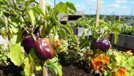 طرق الزراعة العضوية