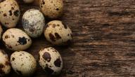 طريقة أكل بيض السمان