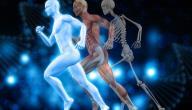 معلومات عن أجزاء الجسم