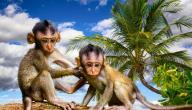 طرائف وعجائب عالم الحيوان