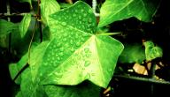 طريقة تنفس النبات في الليل