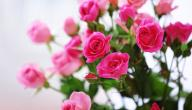 تفسير الورد في الحلم