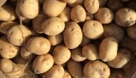 فوائد البطاطس لعلاج حب الشباب