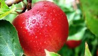 فوائد التفاح للشعر والبشرة