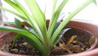 ماذا يتنفس النبات