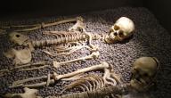 كم عدد العظام في الهيكل العظمي