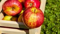 معلومات عن فوائد التفاح