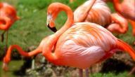 معلومات عن أنواع الطيور