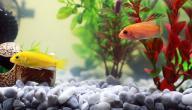 طريقة عمل حوض السمك