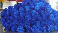 ماذا تعني الوردة الزرقاء