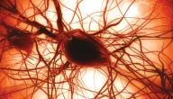 ما هي وظيفة صفائح الدم