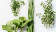 علاج ضعف الأعصاب بالأعشاب