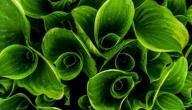 مم يتكون النبات