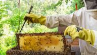 كيفية تربية النحل بتونس