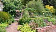 ماذا أزرع في حديقة منزلي