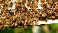 مراحل صنع العسل
