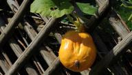 ماذا أزرع في الصيف