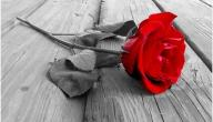 ما صفات الحب الحقيقي