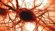 علاج نقص الصفائح الدموية لمرضى الكبد