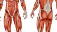 ما هي اجهزة جسم الانسان