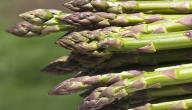ما هو نبات الهليون
