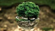 ما معنى تلوث البيئة
