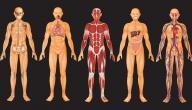 ما أجزاء جسم الإنسان