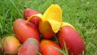 ما هي فوائد فاكهة المانجو