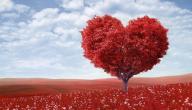 علامات الحب في علم النفس