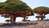 معلومات عن جزيرة سقطرى اليمنية