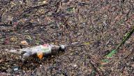 كيفية حماية التربة من التلوث