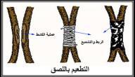 كيفية تطعيم الاشجار المثمرة