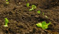 كيفية المحافظة على التربة من التلوث