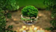 مقال عن حماية البيئة من التلوث