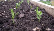 كيفية حماية التربة