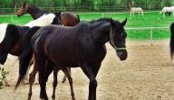 ما هي أنواع الخيول