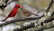 كيفية تربية عصافير الحب