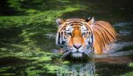 معلومات عن عالم الحيوانات