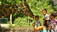 موضوع عن حديقة الحيوانات