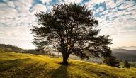 فوائد الشجرة للبيئة