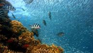 موضوع تعبير عن عالم البحار
