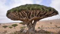 أهم جزر اليمن