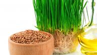 ما هي فوائد جنين القمح للبشرة