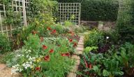 كيف اعمل حديقة صغيرة