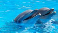 صفات الدولفين