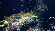 كم عدد البحار والمحيطات في العالم