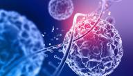 مكونات نواة الخلية
